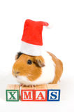 Guinea pig is wearing christmas hat Royalty Free Stock Photography