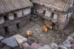 Guinea pigs in Peru Royalty Free Stock Photos