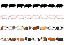 Guinea pigs in a row set. Collection of Guinea pigs in a row, line art , silhouette, with and without colors on white background royalty free illustration