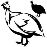 Guineafowl. (Numida meleagris) bird vector design - standing guinea hen profile outline and silhouette Stock Photo