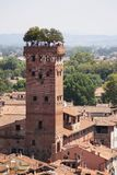 Guinigi tower Lucca Royalty Free Stock Photos