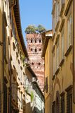 Guinigi tower in Lucca, Italy Royalty Free Stock Photo