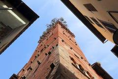 Guinigi Tower in Lucca Stock Image