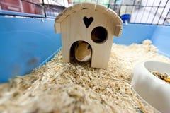 Guinnea-Schwein-Haus Stockfoto