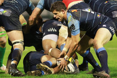 Guinnes pro-12 rugby - Benetton vs Cardiff Royaltyfri Fotografi