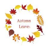 Guirlande avec les feuilles d'automne colorées vorious illustration libre de droits