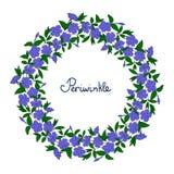 Guirlande avec les fleurs bleues de bigorneau Élément pour le vinca de guirlande de conception modèle de fleur de catharanthus Photo libre de droits
