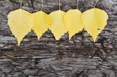 Guirlande d'automne Image libre de droits