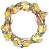 Guirlande de feuilles d'acacia dans un style d'aquarelle Image stock