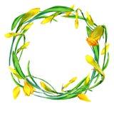 Guirlande de fleur de jardin et de jeune herbe verte Images stock