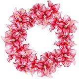 Guirlande de fleurs d'Amaryllis Photos stock