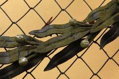 Guirlande de laurier au cimetière dans Jaromer, République Tchèque Photo stock