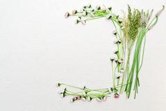 Guirlande de marguerite et d'herbe verte sur le fond blanc Photo libre de droits