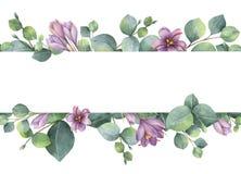 Guirlande de vecteur d'aquarelle avec les feuilles vertes d'eucalyptus, les fleurs pourpres et les branches Photographie stock