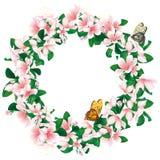 Guirlande des fleurs de cerisier sur le blanc Trame romantique de fleur illustration libre de droits
