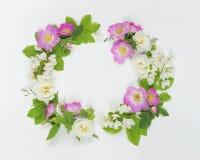 Guirlande des fleurs sauvages Photo libre de droits