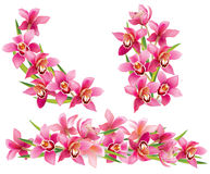 Guirlande des orchidées Image stock