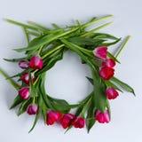 Guirlande des tulipes de framboise sur le fond blanc Photographie stock libre de droits