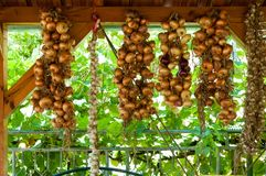 Guirlande faite d'ampoules d'oignon jointes sur la vieille construction en bois Photos libres de droits