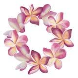 Guirlande rose de plumeria Illustration botanique de fleurs de coeur Vue Photographie stock