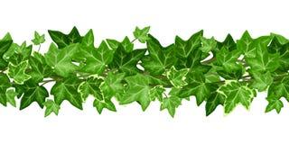 Guirlande sans couture horizontale avec des feuilles de lierre Illustration de vecteur Image stock