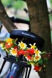 Guirlande sur le vélo Photo libre de droits