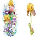 Guirlandes des fleurs d'iris Images libres de droits