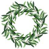 Guirnalda con brunches y hojas blandos de las aceitunas libre illustration