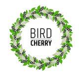 guirnalda con las flores y la cereza de pájaro de las bayas Elementos para el diseño Fotografía de archivo libre de regalías
