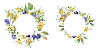 Guirnalda de bayas de rasgado y espino amarillo Conveniente para las tarjetas, invitaciones Ilustración del Vector
