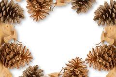 Guirnalda de conos en un fondo blanco Fotografía de archivo