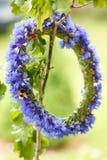 Guirnalda de cornflowers azules Imagen de archivo libre de regalías
