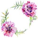 Guirnalda de la flor de la amapola del Wildflower en un estilo de la acuarela Fotografía de archivo libre de regalías