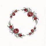 Guirnalda de la flor del protea de la acuarela Imágenes de archivo libres de regalías