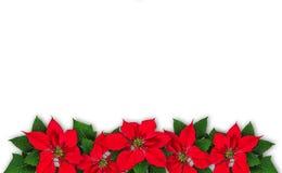 Guirnalda de la flor de la poinsetia Foto de archivo libre de regalías