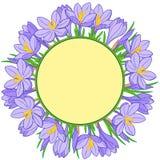 Guirnalda de la flor de la primavera de azafranes Elementos del vector aislados ilustración del vector