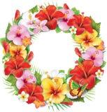 Guirnalda de la flor tropical Imagenes de archivo