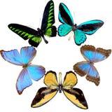 Guirnalda de la mariposa Fotografía de archivo libre de regalías