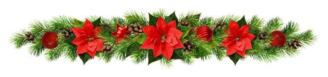 Guirnalda de la Navidad con las flores del pionsettia, las ramitas del pino y el de rojos Fotografía de archivo
