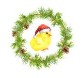Guirnalda de la Navidad, pequeño gallo en sombrero rojo del ` s de santa Pájaro de la acuarela Foto de archivo libre de regalías