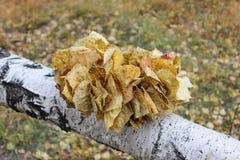 Guirnalda de las hojas de otoño amarillas Foto de archivo libre de regalías
