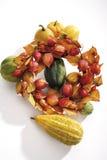 Guirnalda de las plantas del otoño con las pequeñas calabazas Fotos de archivo libres de regalías