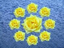 Guirnalda de rosas Fotos de archivo