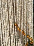 Guirnalda del arroz Imagen de archivo