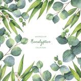Guirnalda del cuadrado de la acuarela con las hojas y las ramas verdes del eucalipto ilustración del vector