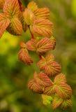 Guirnalda del otoño Fotografía de archivo libre de regalías