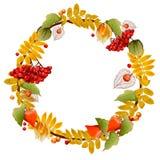 Guirnalda del otoño de la ceniza del physalis y de montaña Imagen aislada stock de ilustración