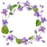 Guirnalda del violetand del bosque y de la hierba verde joven Fotos de archivo libres de regalías