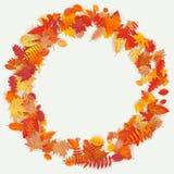 Guirnalda hecha de las flores y de las hojas del otoño en fondo ligero Composición del otoño EPS 10 ilustración del vector
