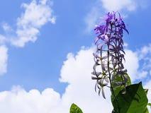 Guirnalda púrpura fresca Imagen de archivo libre de regalías